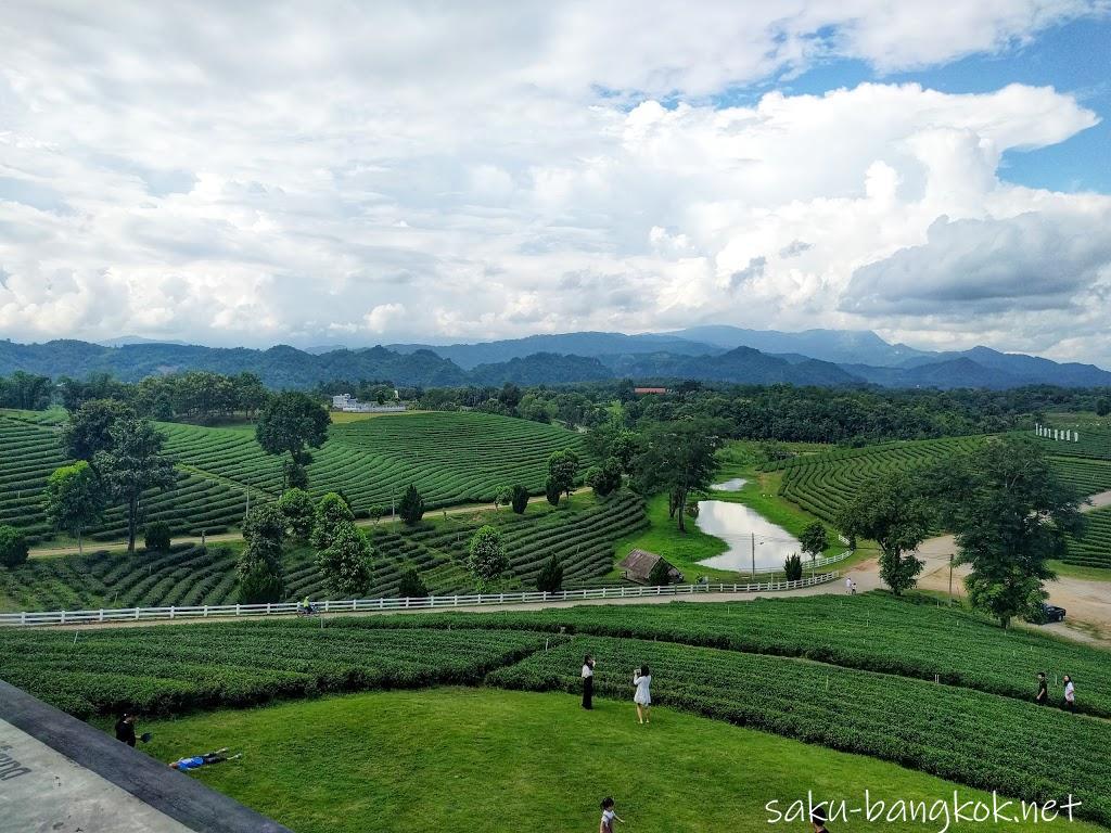 ェンライ・チュイフォン(Choui Fong)の茶畑はおしゃれカフェ併設で若者に大人気!