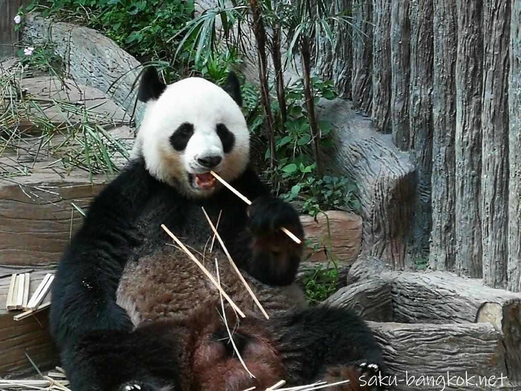 チェンマイ動物園でパンダを見よう【チェンマイ旅行記2017