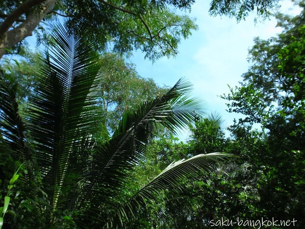 スリナコン・クエンカーン公園内の植物