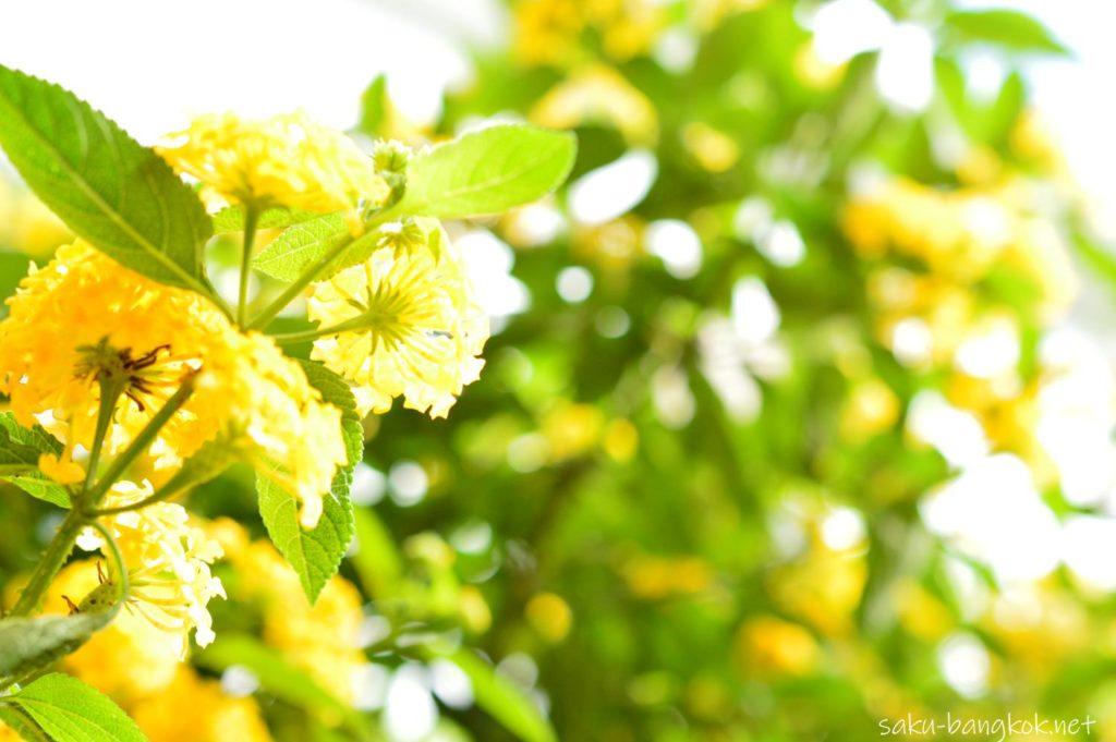 花いっぱいのダラット