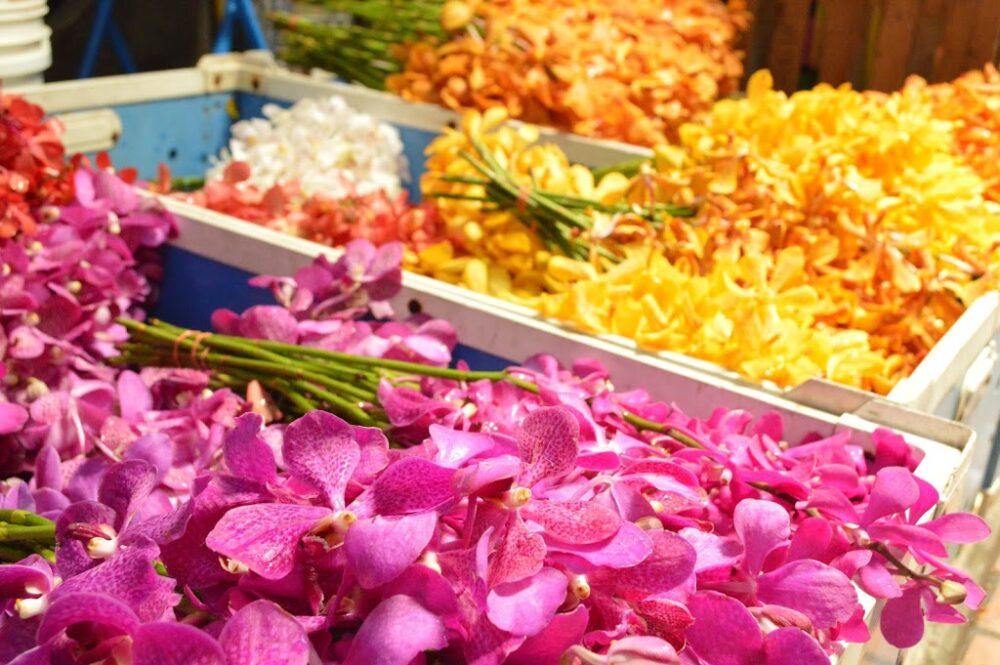 ピンクと黄色の蘭の花