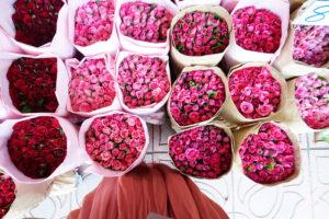 サク監修のツアーで訪れる花市場