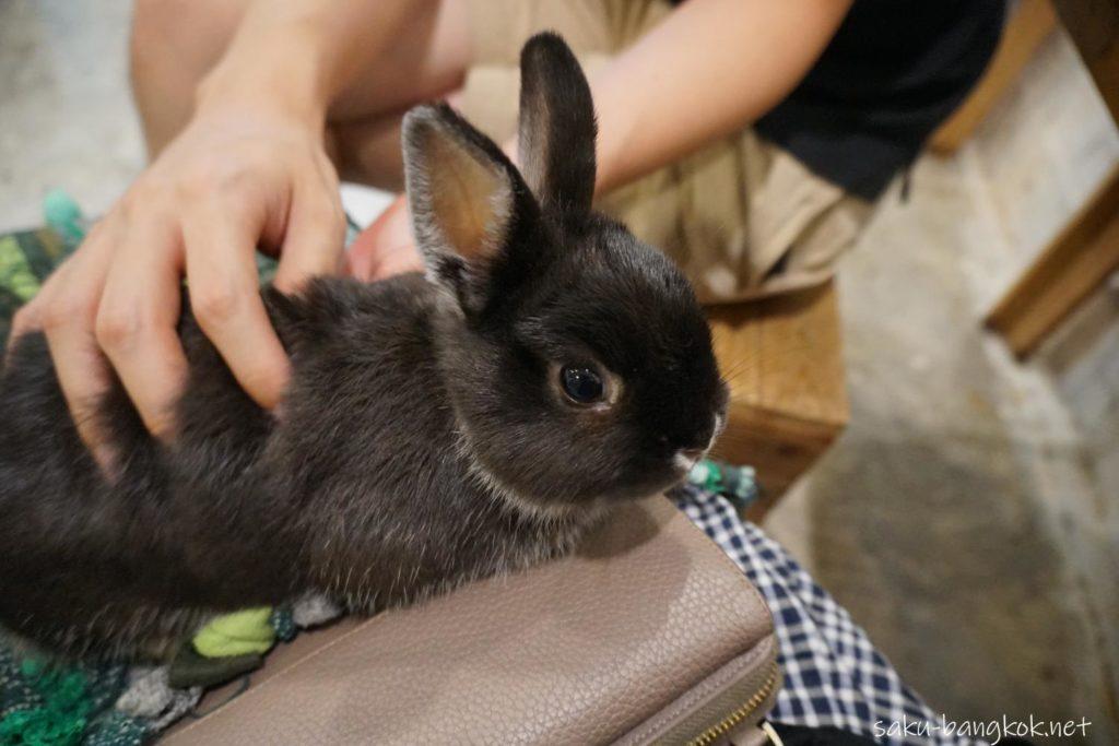うさぎカフェ【Rabbit Cafe】ひざの上にうさぎを乗せる