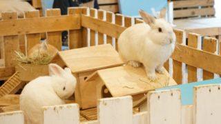 うさぎカフェ【Rabbit Cafe】のタイトル画像