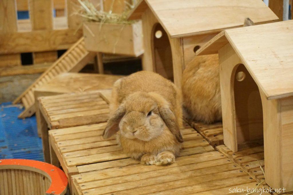 うさぎカフェ【Rabbit Cafe】のうさぎ