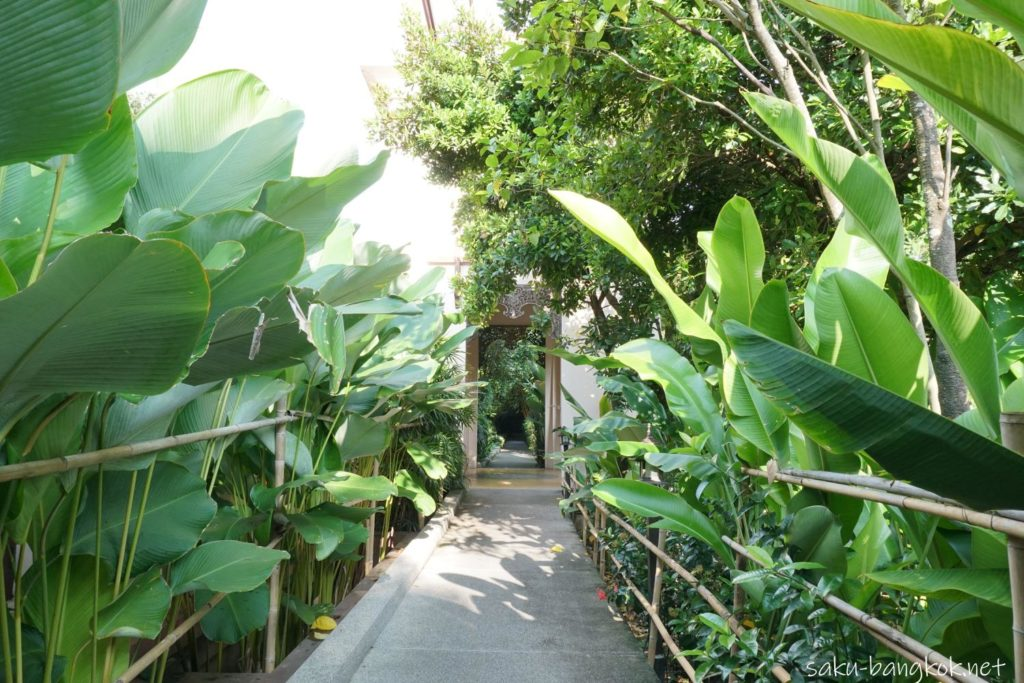 チェンマイホテル シリパンナ ヴィラ リゾート & スパ 緑いっぱいの通路