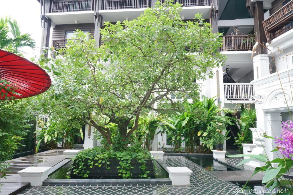 チェンマイのスパ【Zira Spa】中庭の木