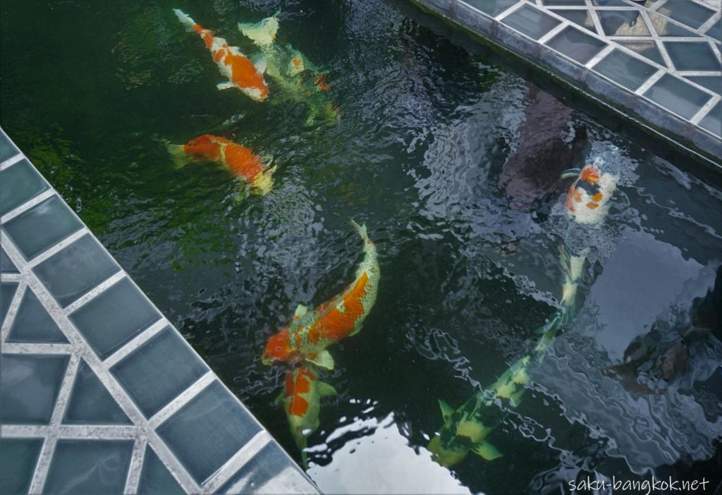 チェンマイのスパ【Zira Spa】の鯉