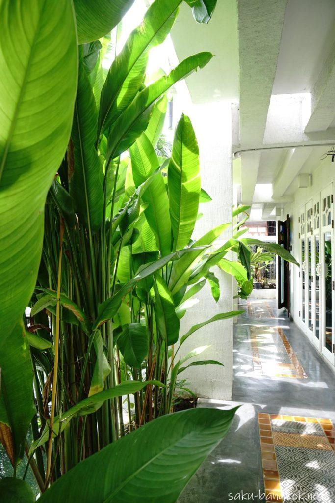 チェンマイのスパ【Zira Spa】の廊下の植物