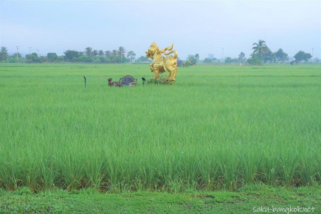 チェンマイ郊外の田んぼの真ん中でリラックス♪【プーサンファー リゾート】からの景色】